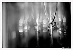 papyrus (look-book) Tags: blackandwhite bw white black film glass analog canon blackwhite foto trix t90 d76 55mm fotos sw papyrus analogue 12 asph fd rosenthal lookbook selfdeveloped aspherical analogous analogicas análogo