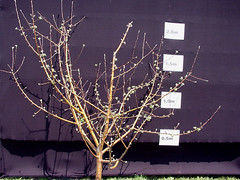 P.18 Tree