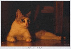 Kintu in candle light (Rhivu_Ray) Tags: world portrait copyright pet cats india color cute eye art beauty night cat canon photography eos 50mm eyes asia candle close 7d bengal cutecat bangla westbengal indiancat kharagpur canonef50mmf18ii kittysuperstar kintu bestofindia eos7d canoneos7d paschimbanga ringexcellence rhivu rhivuray rhitamvarray rhivuphotography
