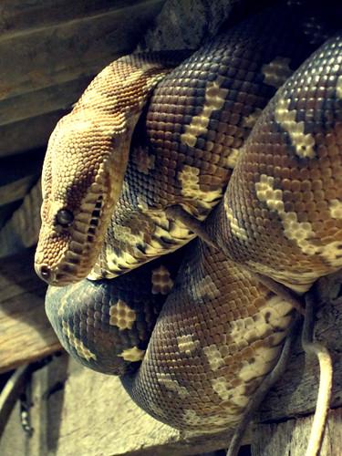 .snake001