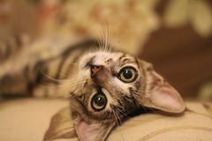 Bom final de semana a todos! (DeniSomera) Tags: pet cat família gata nina gatinha bichinho animaldeestimação 4meses aracajuse