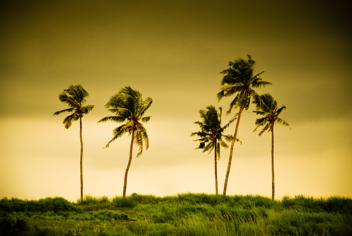 The 5 Palm trees at Bekal