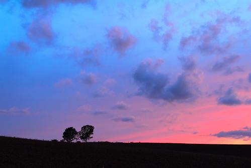青い空がピンクに染まる