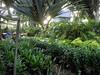 DSC02698 (rantavani) Tags: plantas tropicais