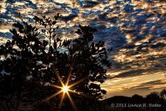 20110811 Sunrise Thursday-3-Edit_PSE.jpg (Degilbo on flickr) Tags: sunrise brisbane flare queensland goldenhour canonef2470mmf28l canoneos500d lightroom3 365223 topazadjust spicify pjj365 adobephotoshopelements9 mosaug11