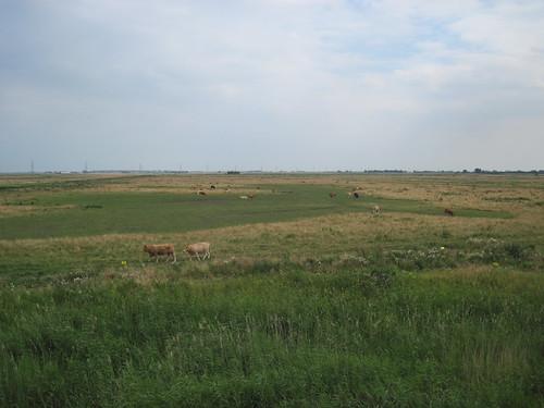 Cowfields