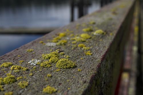 that particular lichen...