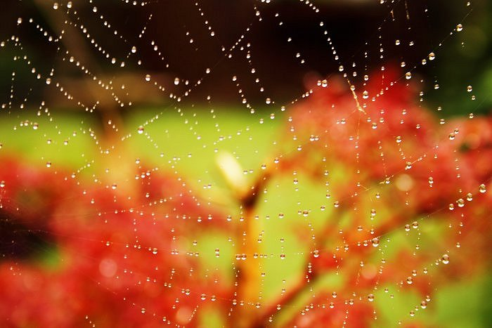 Cobweb in the rain