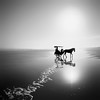 Ocean Journey (Hengki Koentjoro) Tags: ocean sea horse sun white black reflection beach wet water beauty silhouette square carriage path horizon surreal diagonal journey shore foam transportation ethereal sands artlibres absoluteblackandwhite bestcapturesaoi —obramaestra— elitegalleryaoi truthandillusion