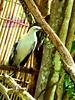 P1000206 (Joanna Jane Liwag) Tags: puertoprincesa palawan butterflygarden crocodilefarm bakershill plazacuartel mitrasranch palawanwildliferescueandconservationcenter palawancitytour
