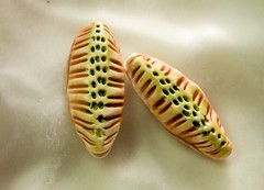 multicolor shell pods (SelenaAnne) Tags: beads handmade polymerclay cernit
