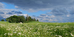 DSC_1004 (Bargais) Tags: blue summer cloud flower tree green nature field forest landscape natural country hill meadow latvia vasara latvija daba