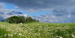 DSC_1004 (Bargais) Tags: blue summer cloud flower tree green nature field forest landscape natural country hill meadow latvia vasara latvija daba