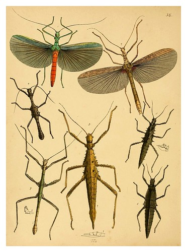 017-The cabinet of oriental entomology…1848- John Obadiah Westwood