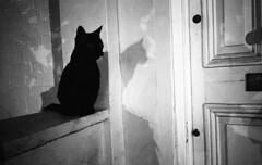 Black Black Cat. (Dominica69) Tags: door black film wall cat 35mm eyes shadows kodak tail whiskers ricoh gr1v bw400cn thecatwhoturnedonandoff