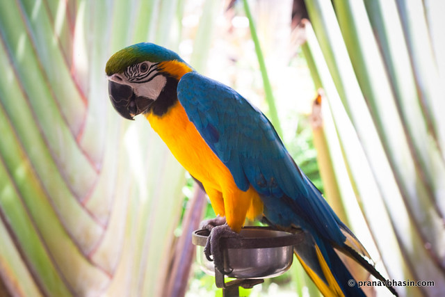 The Fidgety Parrot