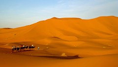 Erg Chebbi desert, Morocco (Ferry Vermeer) Tags: africa travel sahara day desert northafrica dunes dune dromedary clear camel morocco maroc marocco maghreb muslims marruecos camels marokko marrocos fas erg merzouga marocko travelphotography ergchebbi sandsea dromedaries marokk maroko   maghrib ergs  islamicworld dunesea  northwestafrica   meknstafilalet  saharandesert    almarib   themaghreb saharanerg  ringexcellence  dblringexcellence tplringexcellence islamworld errachidiaprovince lmarib saharanergs amknastafilalt arq ferryvermeer  irkaszszabbi