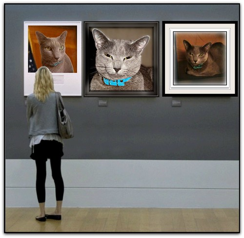 "Why vote for ""Meg the Cat""?  Because she looks great in a Gallery!"