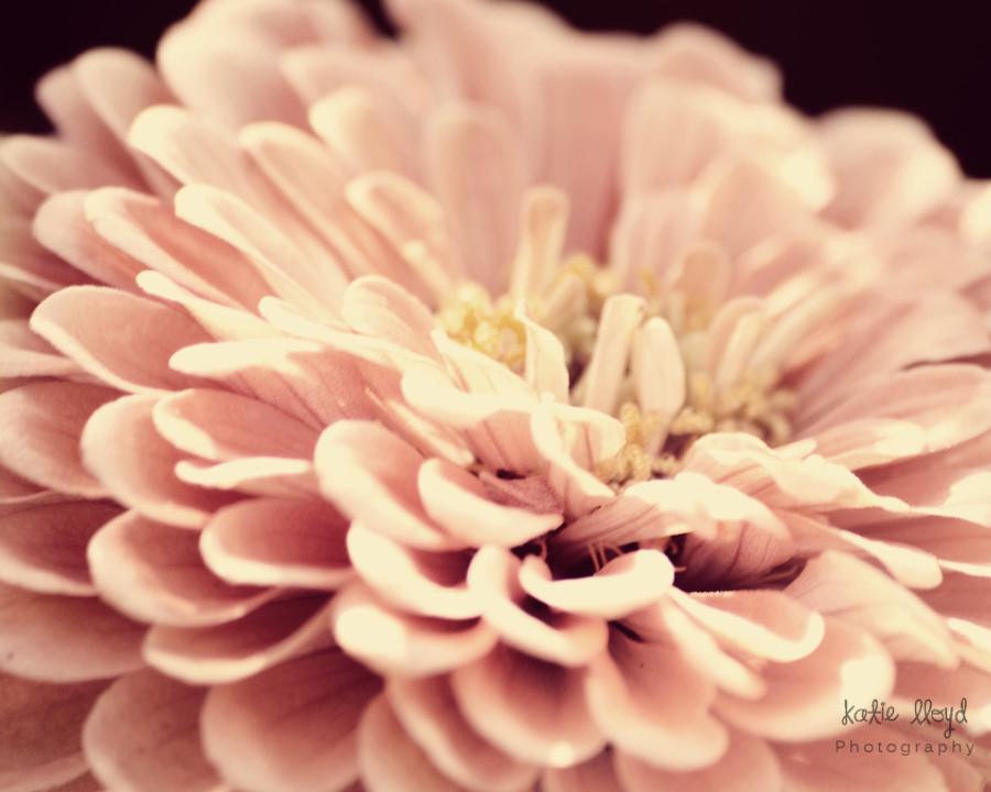 Peach-zinnia---16x20