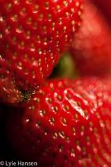IMG_3930.jpg (serpentinite2011) Tags: food macro strawberries