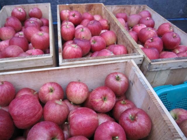 Apples on Sep. 10, 2011_3