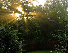 Morning sun peeks through the trees (loco's photos) Tags: morning trees light sun fog yard fence pentax kr sunrays sunbeam pentaxkr da3524