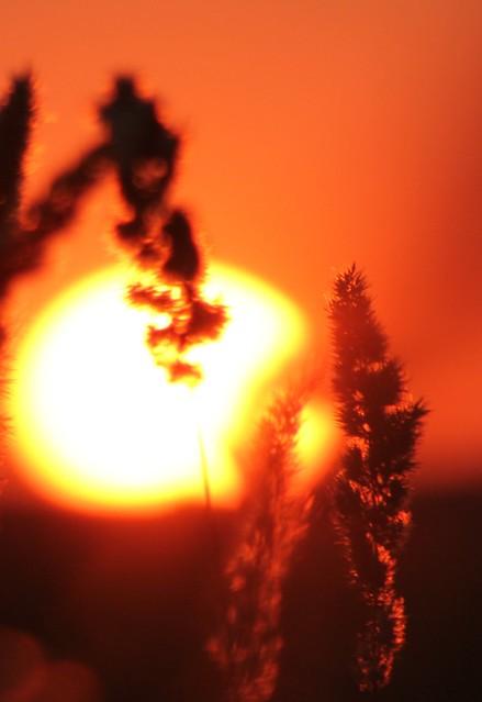 ikebana Soarelui