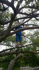 northwest primate sighting in Maui (Beth Kelley) Tags: vacation tree hawaii maui parkour rafe