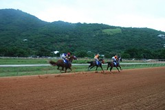 ThreeHorseRace (sportfisher) Tags: horse horseracing virginislandsuk augustfestival