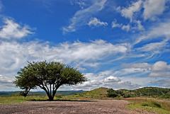 El Arbusto, en el Contexto es Bello... (OctavioBJ) Tags: trees sky clouds landscapes arboles cielo nubes arbusto supershot abigfave flickrdiamond 100commentgroup octaviobj blinkagain artistoftheyearlevel3 flickrstruereflection1 rememberthatmomentlevel1 rememberthatmomentlevel2