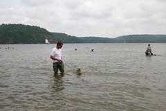 "Interesting shot of Dog beach ""Bon Echo"" (milikin) Tags: bon dog beach swimming puppies lab soft echo terrier coated wheaten"
