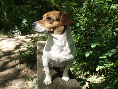 dog seat 2 (wildcamper1) Tags: two dog brown white black jack seat russel nat