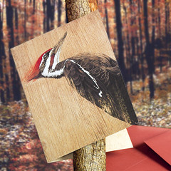 Red-headed Woodpecker (snailspacepaper) Tags: environment wildlifecards naturecards recycledcards