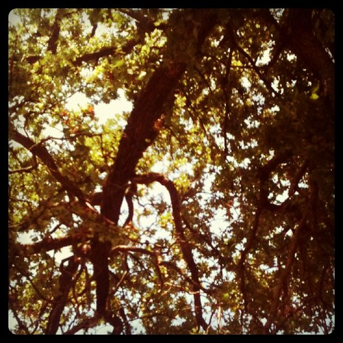 Pretty view under the tree at the park