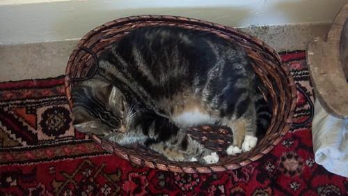 Whoopie Cat