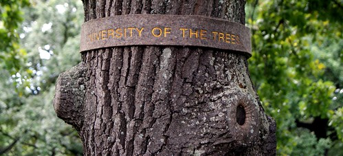 university of the tree
