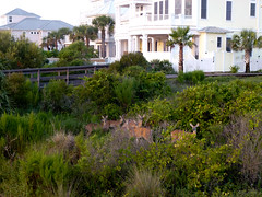 top 10 real estate properties from coastal Southern Delaware viewed on ResortQuestDE.com - High-Class-Deer