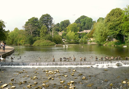 Weir with geese