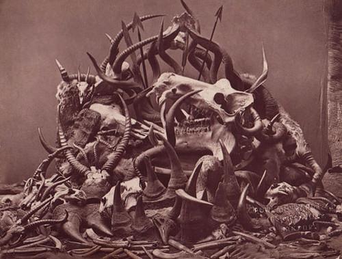 skullpile