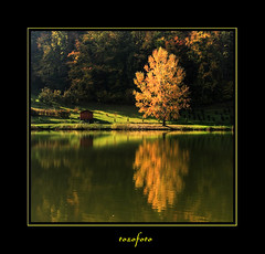 (tozofoto) Tags: trees light shadow lake reflection water colors canon landscape hungary natur zala tozofoto saariysqualitypictures