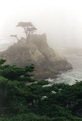 Lone Cypress in the Fog 9-1998 (inkknife_2000 (10.5 million + views)) Tags: carmelca lonecypress pebblebeach 17miledrive fog dgrahamphoto beach coastline cypress waves