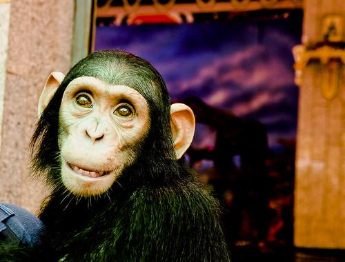 Crocodile Farm :: Chimpanzee