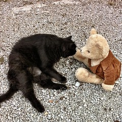 At his first day in his new home #Bear met his first new friend #Rôchat