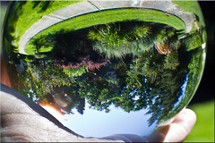 My Upside Down World (Jill Clardy) Tags: trees grass ball upsidedown crystal palm sidewalk refraction reversed sunbeam 2347