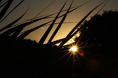 Trenched in my peace (Luca Deias) Tags: sunset leaves silhouette foglie tramonto trenched