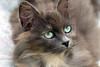 Douchka, M'chicha, Mounette, Pina et les autres (jacques pasqueille) Tags: cat kat chat gato katze 猫 gatto kot gat 貓 mèo кошка قط unamourdechat קאַץ