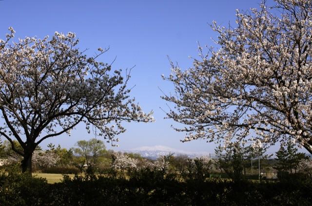 春はひと足ずつ 木場潟と白山その1