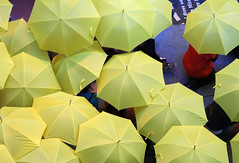 (PC - My Shots@Photography) Tags: california road weather yellow horizontal closeup outdoors rainyday hollywood hollywoodblvd umbrellas repitition highangle colorimage umbrell