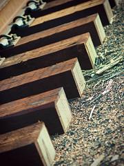 Tied (jaxxon) Tags: railroad abstract macro geometric lines train ties lens prime nikon pattern dof bokeh geometry tracks angles depthoffield micro repetition fixed abstraction 28 mm nikkor f28 vr afs linear 105mm lineal 105mmf28 d90 nikor f28g gvr jaxxon 105mmf28gvrmicro nikkor105mmf28gvrmicro nikon105mmf28gvrmicro jacksoncarson