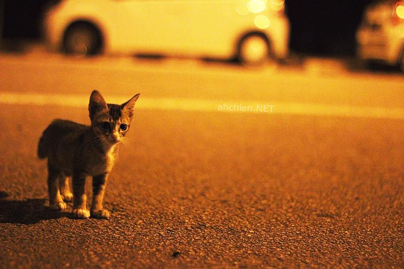 猫 · 语